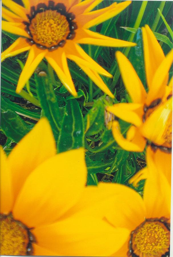 Sunflowers Arranged Naturally. Mixed Media - Sunflowers Medley by Robert Bray