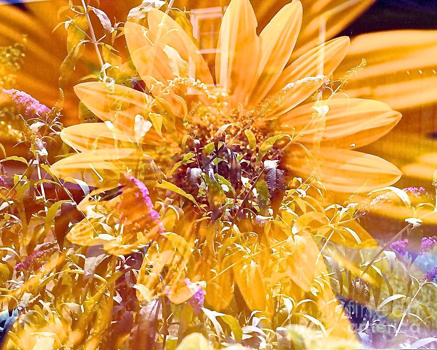Sunglints Photograph