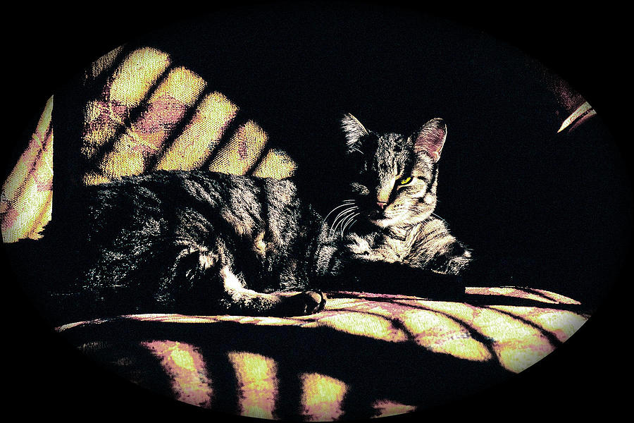 Cat Digital Art - Sunlight And Whiskers by Ronald Hurst