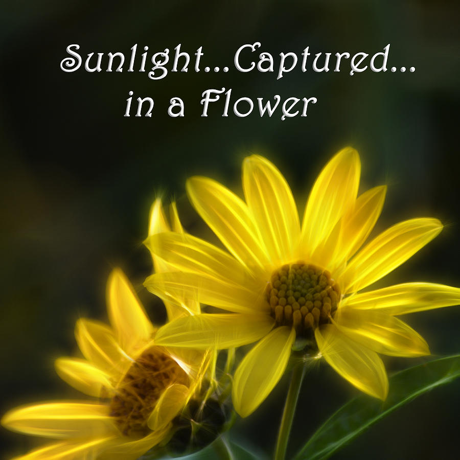 Yellow Flower Photograph - Sunlight Captured In A Flower by Beth Sawickie