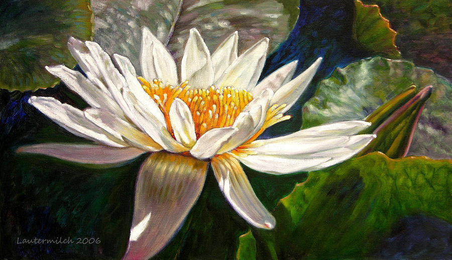 Water Lily Painting - Sunlight On White Lily by John Lautermilch
