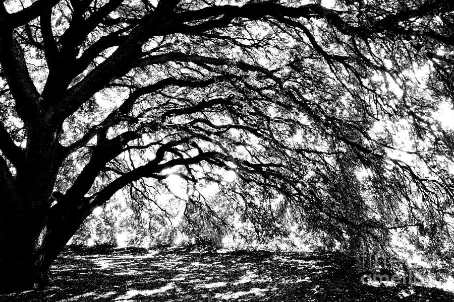 sunlight through trees black - photo #18