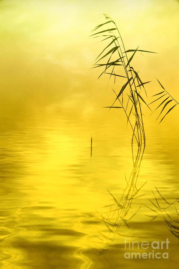 Abstract Photograph - Sunlight by Veikko Suikkanen