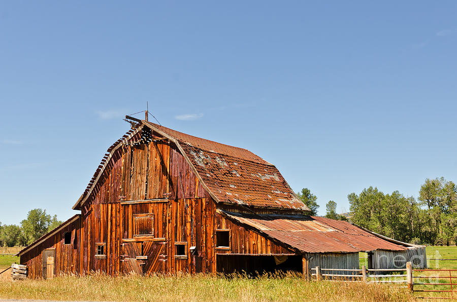 Montana Photograph - Sunlit Barn by Sue Smith