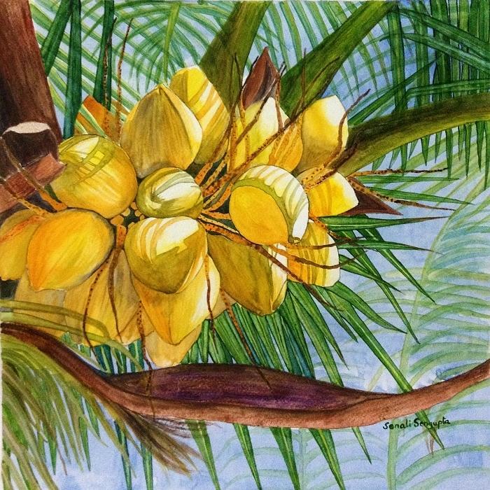 Coconut Painting - Sunlit Coconuts by Sonali Sengupta