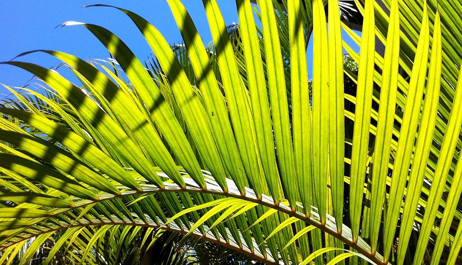 Vacation Photograph - Sunlit Palm Tree  by Prashant Shah