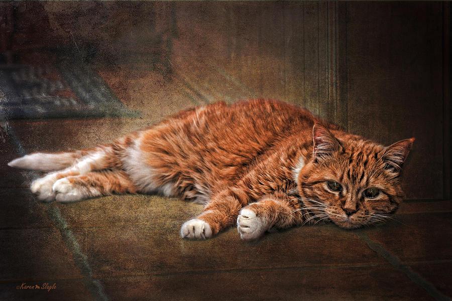 Cat Photograph - Sunning by Karen Slagle