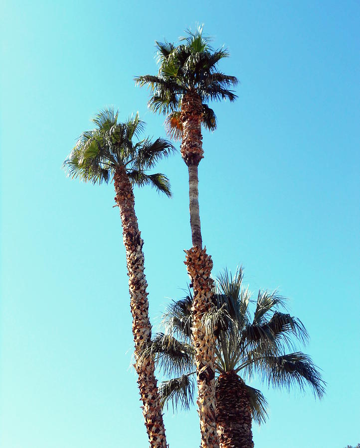 Palm Trees Photograph - Sunny Afternoon by Dietmar Scherf