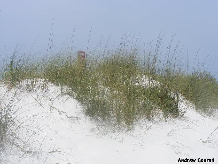 Sand Photograph - Sunny Day In Florida  by Andrew Conrad
