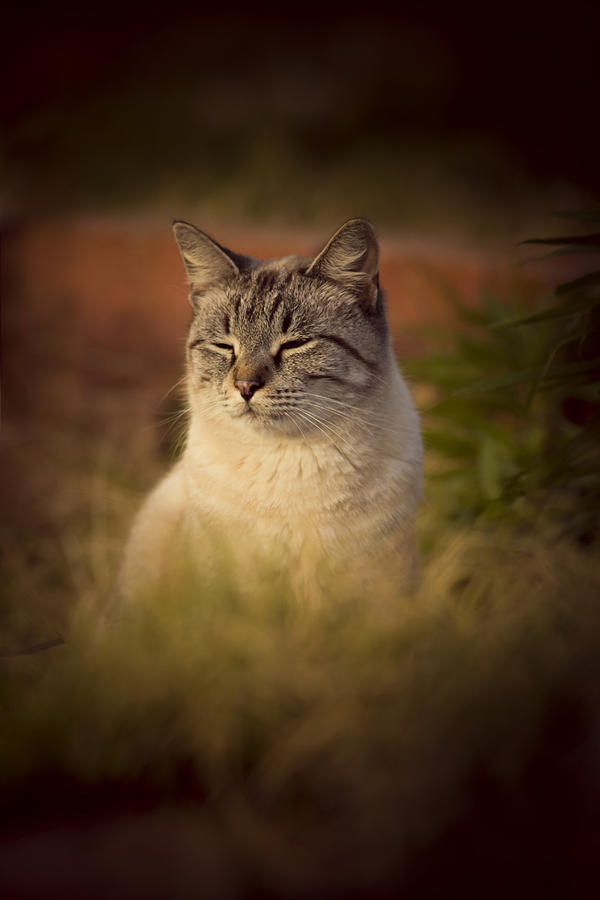 Cat Photograph - Sunny Days Like These by Kim Henderson