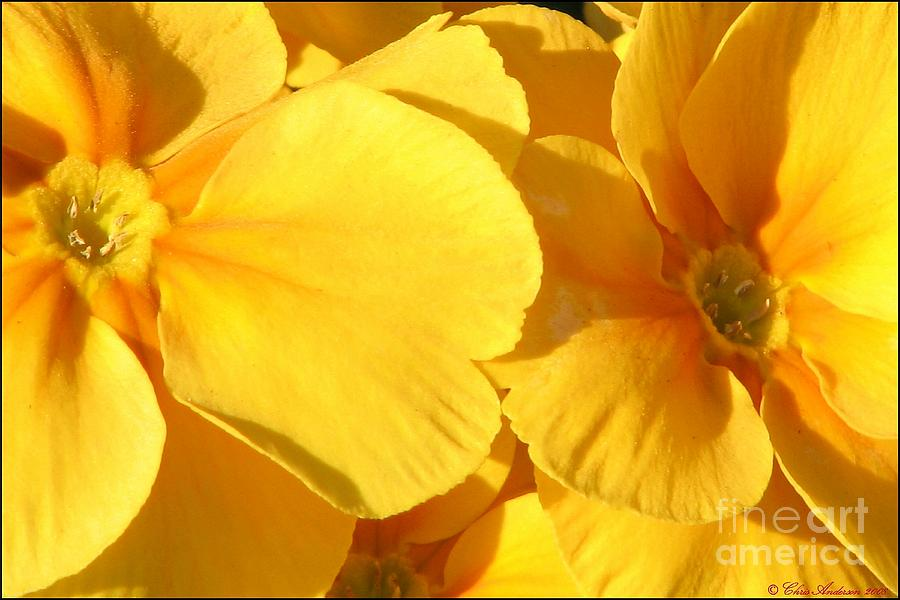 Sunny Photograph - Sunny Disposition by Chris Anderson