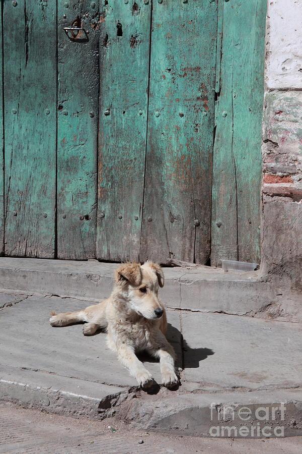 Dog Photograph - Dog Enjoying A Sunny Doorstep by James Brunker