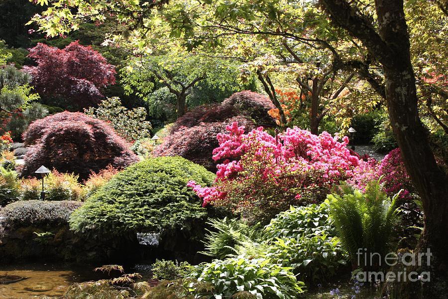 Japanese Garden Photograph - Sunny Japanese Garden by Carol Groenen