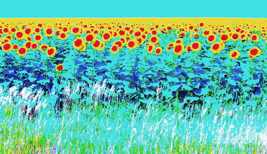 Sunflower Photograph - Sunny Kansas by Ann Johndro-Collins