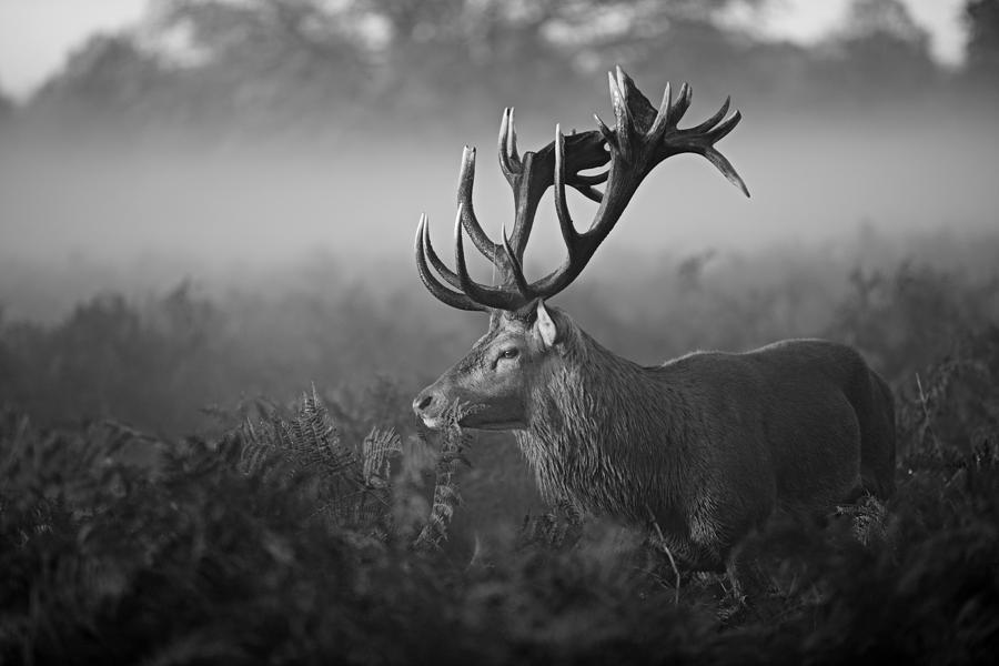 Deer Photograph - Sunny Morning by Robert Fabrowski