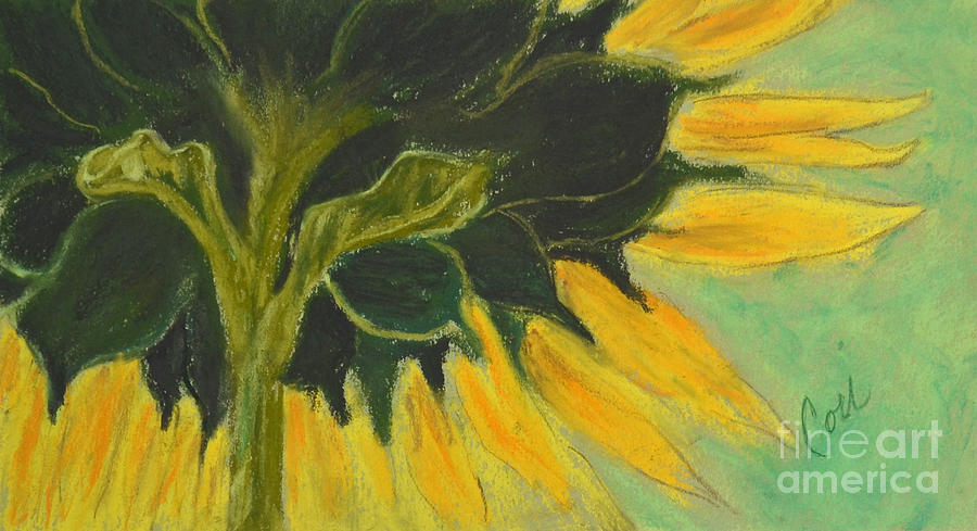 Sunflower Drawing - Sunny Side Up by Cori Solomon
