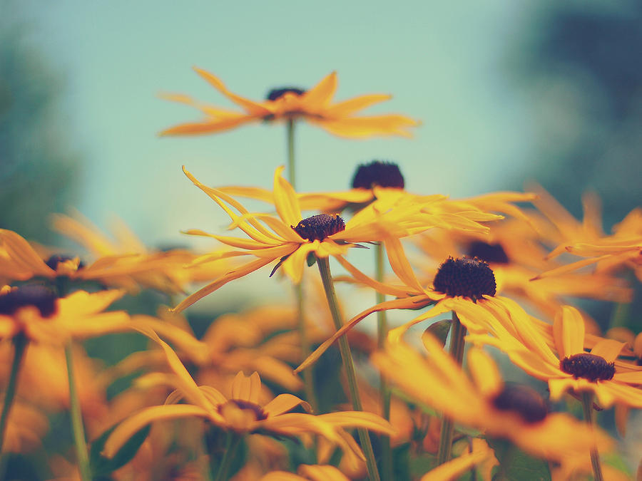 Flowers Photograph - Sunny Side Up by Patrick Horgan