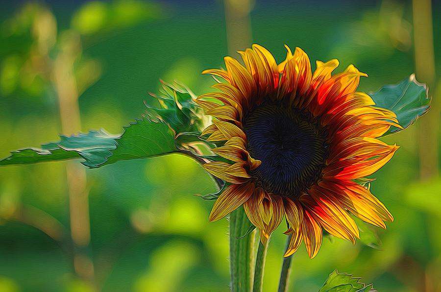 Flowers Photograph - Sunny Sunflower by Denise Darby