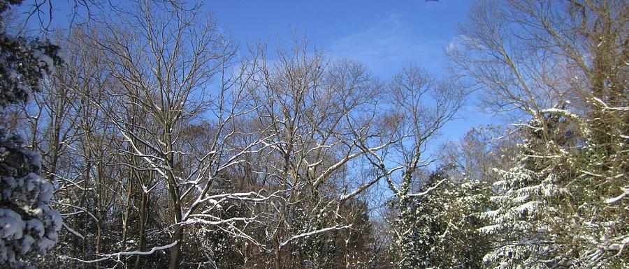 Landscape Photograph - Sunny Winter Sky by Good Taste Art