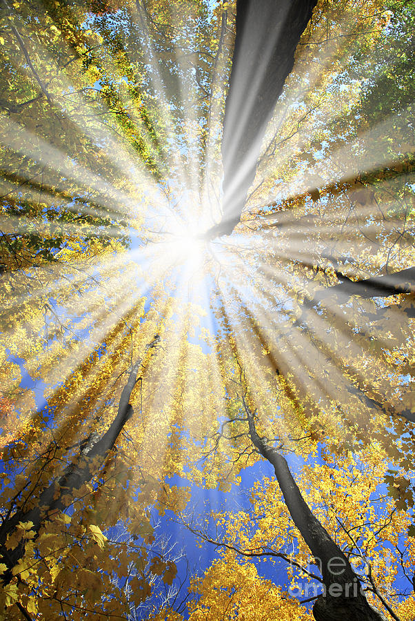 Autumn Photograph - Sunrays In The Forest by Elena Elisseeva