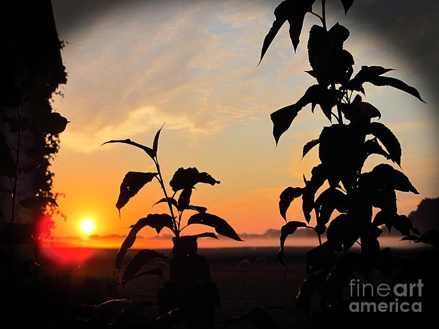 Sunrise 365 6 Photograph