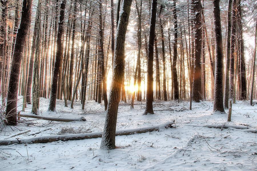 Pine Trees Photograph - Sunrise by Andrea Galiffi