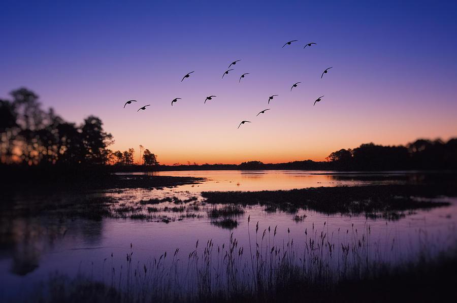 Sunrise At Assateague - Wetlands - Silhouette  Photograph by SharaLee Art
