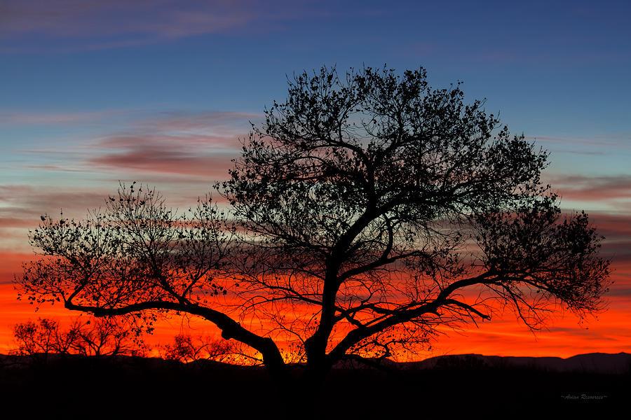Sunrise at Bosque Del Apache by Avian Resources