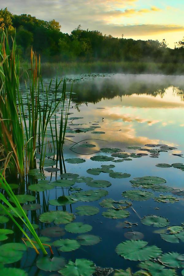 Pokagon State Park Photograph - Sunrise At Pokagon State Park  by Shari Jardina
