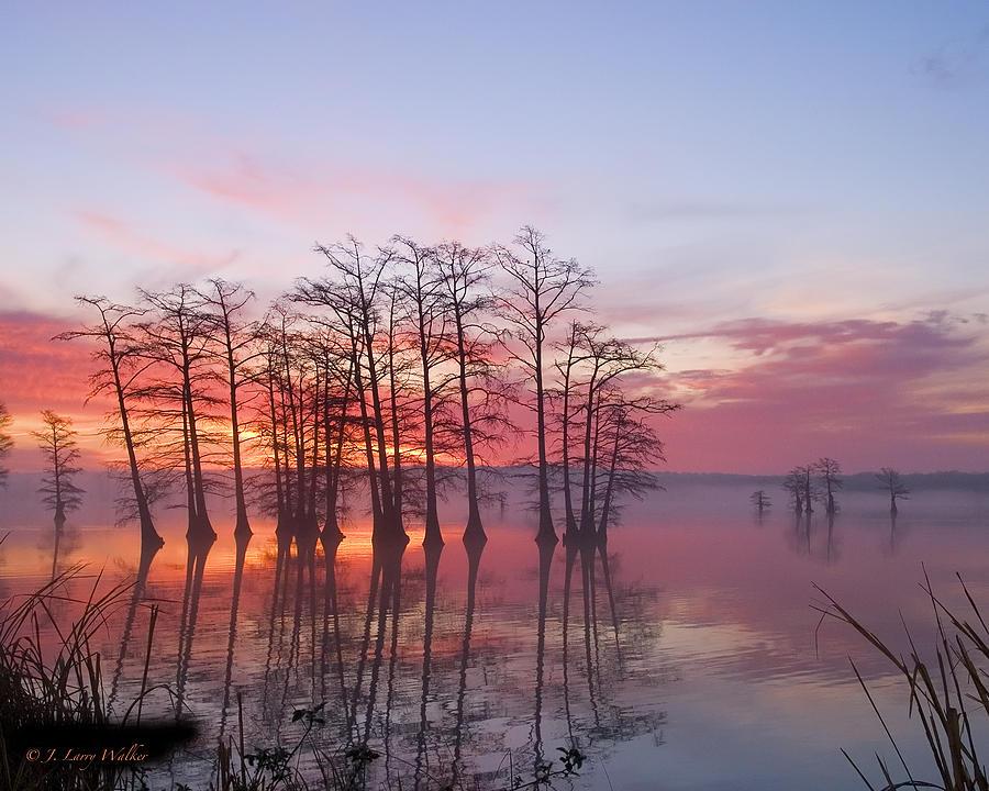 Walker Digital Art - Sunrise At Reelfoot Lake by J Larry Walker