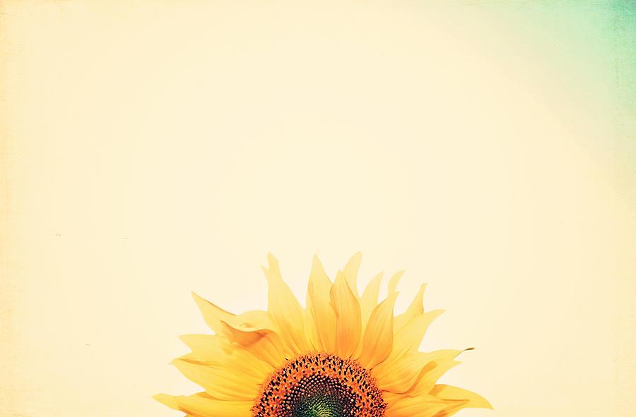Summer Photograph - Sunrise by Carrie Ann Grippo-Pike