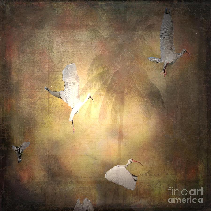 Ibis Photograph - Sunrise Flight by Irma BACKELANT GALLERIES