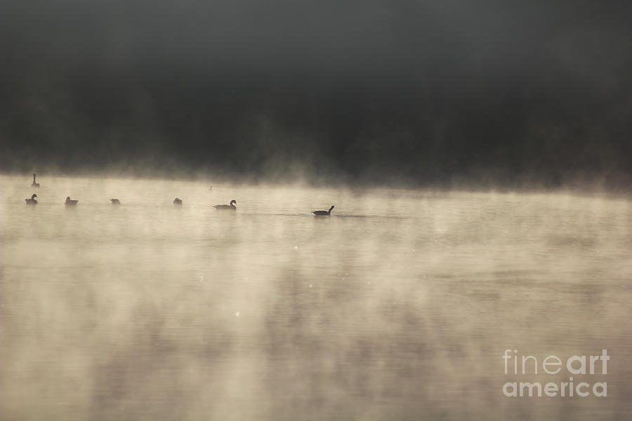 Lake Photographs Photograph - Sunrise Geese by Melissa Petrey
