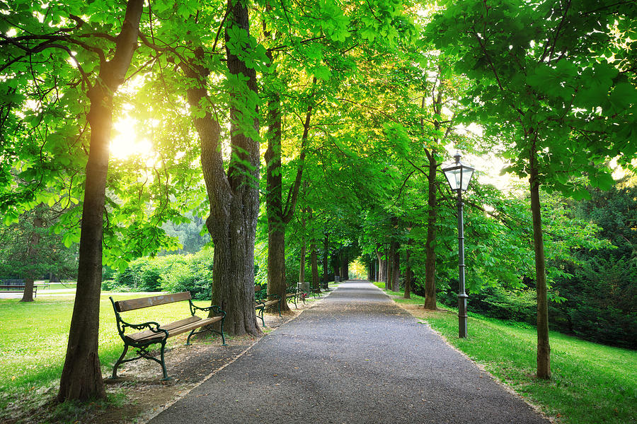 Sunrise In A Green Park Photograph by Borchee