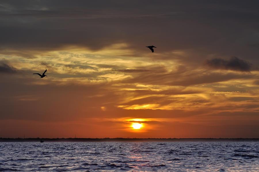 Sunrise Photograph - Sunrise On Tampa Bay by Bill Cannon