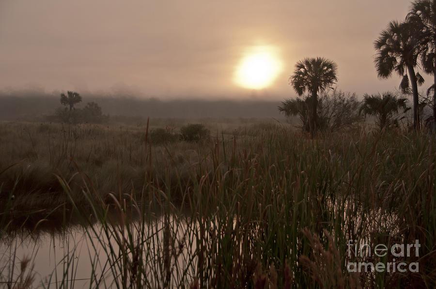 Foggy Photograph - Sunrise on the marsh by Roy Thoman