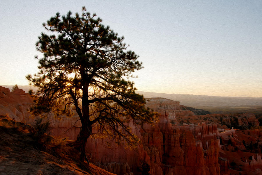 Bryce Canyon Photograph - Sunrise Over Bryce Canyon by Tracy Winter