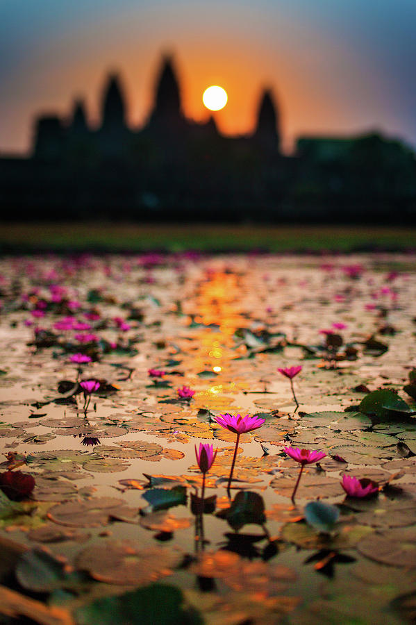 Sunrise Over The Lotus Flowers Of Photograph by © Francois Marclay