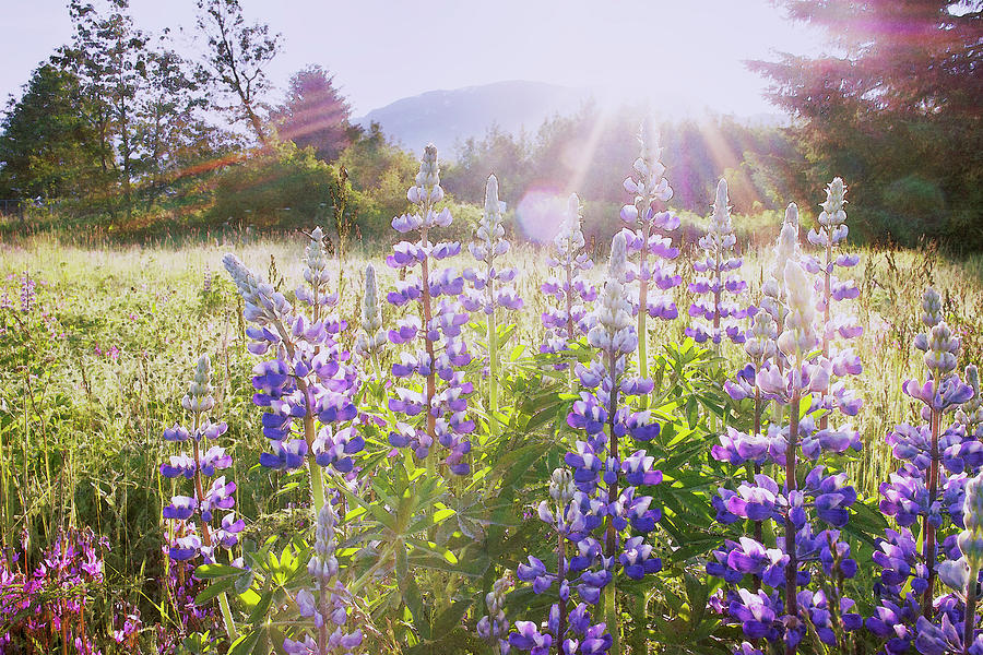 Sunrise Over Wildflowers Photograph by Dagny Willis