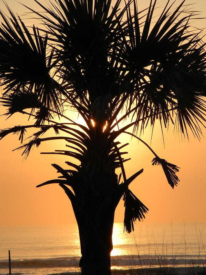 Pom Tree Pyrography - Sunrise Palm  by Joanne Askew