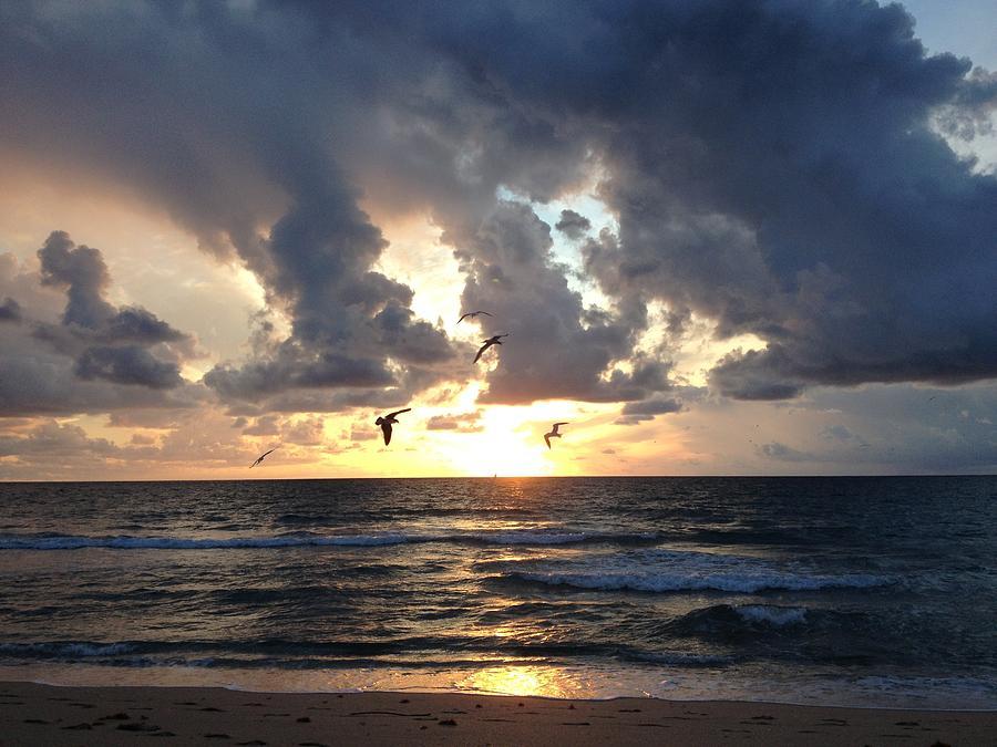 Sunrise Photograph - Sunrise Seagulls by Barbara Von Pagel