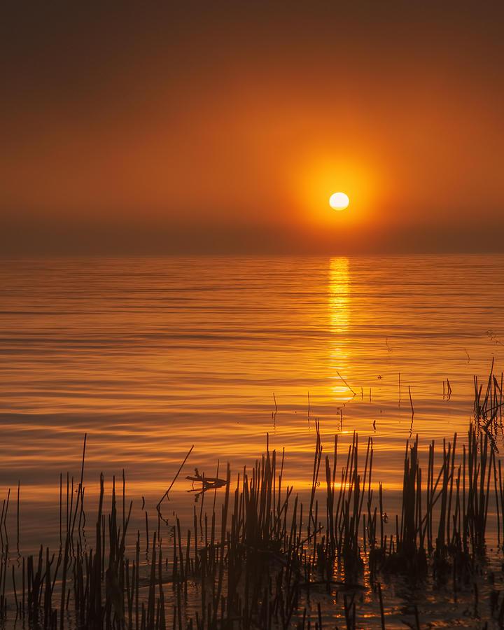 Sunrise Through The Fog Photograph