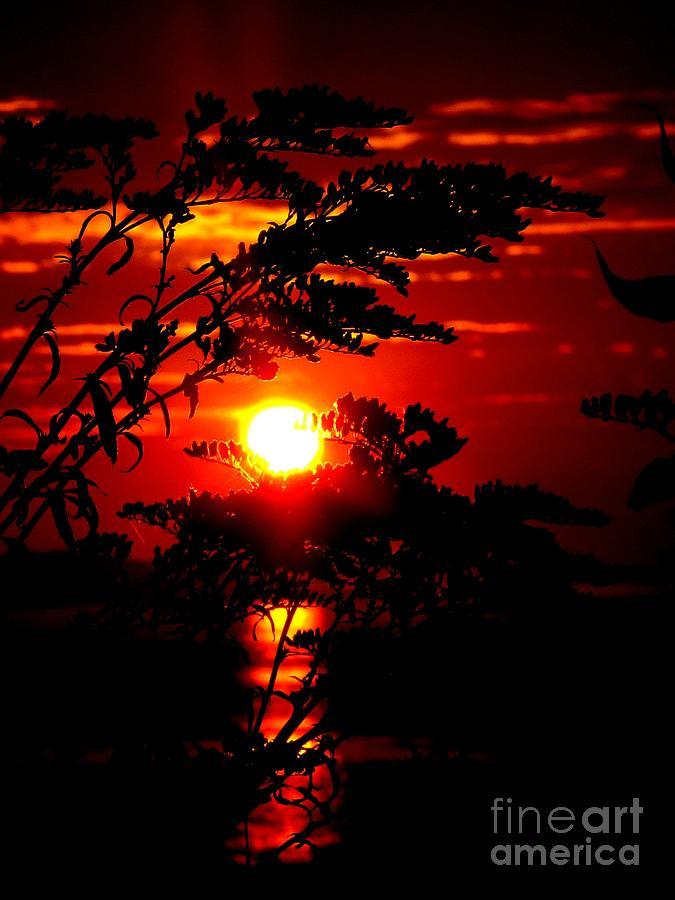 Sunrise Wheat Photograph