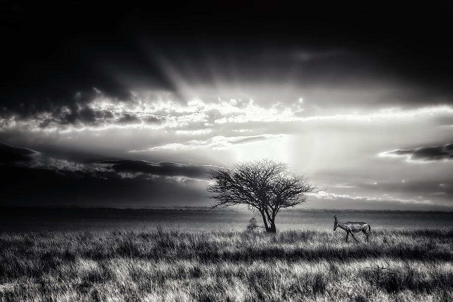 Hartebeest Photograph - Sunrise With Hartebeest by Piet Flour