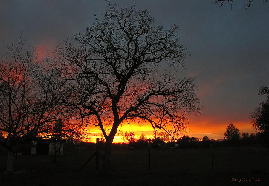 Sunset Photograph - Sunset 02 18 13 by Joyce Dickens