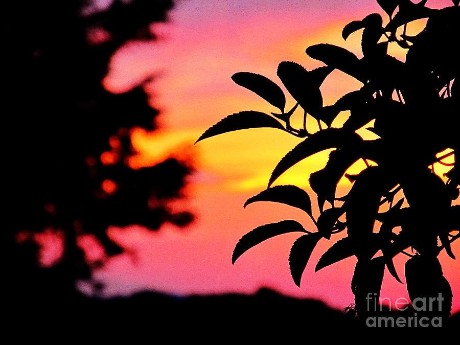 Sundown Photograph - Sunset 365 61 by Tina M Wenger