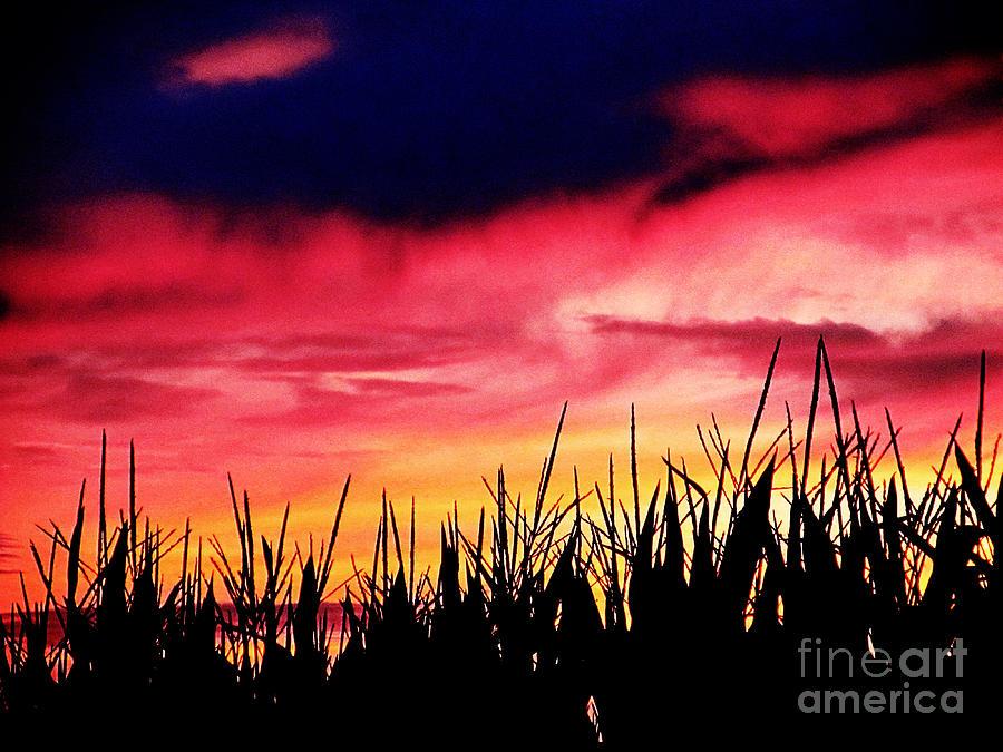 Sun Photograph - Sunset 365 62 by Tina M Wenger