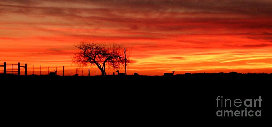 Sunset Photograph - Sunset and Deer Silhouette by Julia  Walsh