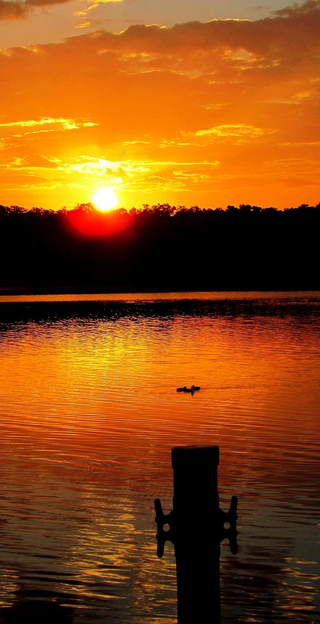 Ducks Photograph - Sunset And Ducks by Will Boutin Photos