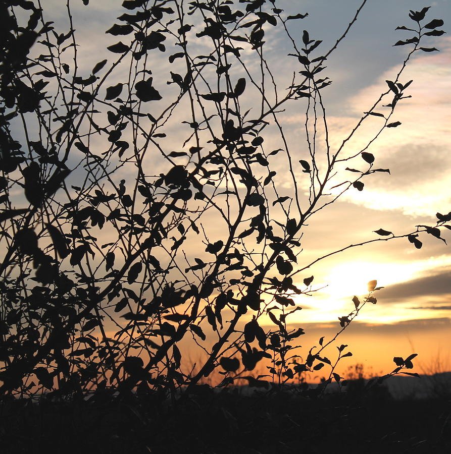 Sunset Photograph - Sunset and Natures Silhouette by Candice Trimble